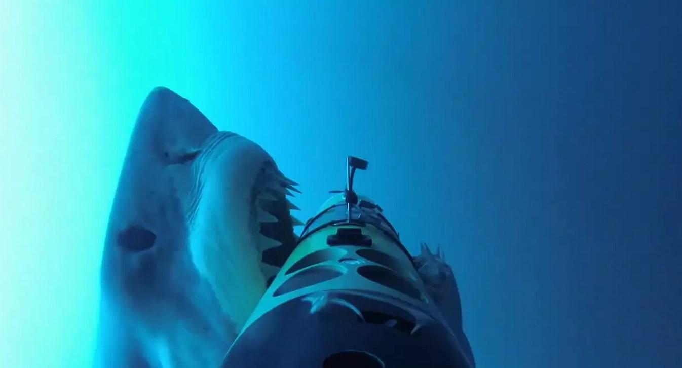 Un tiburón ataca una cámara submarina