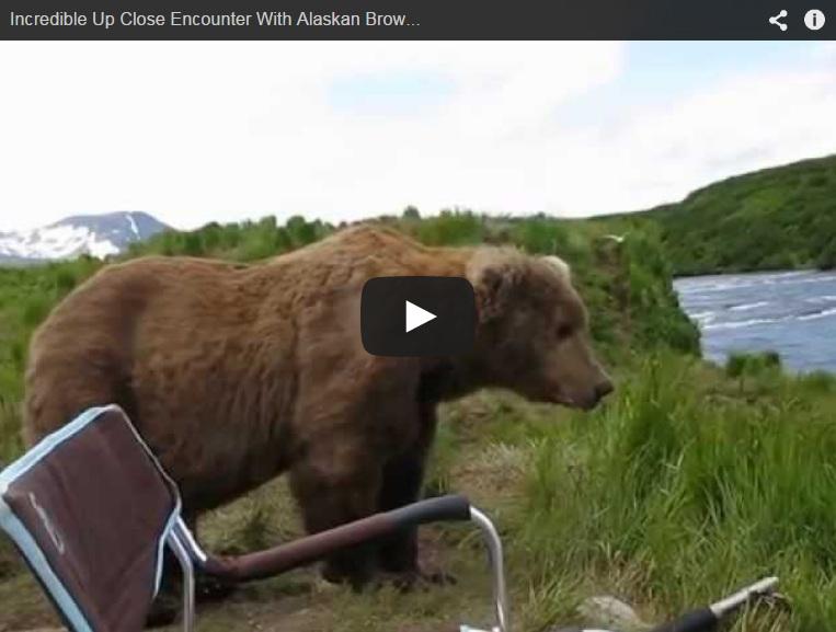 Un oso sorprende por la espalda a un fotógrafo cuando filmaba a otros plantígrados en un río