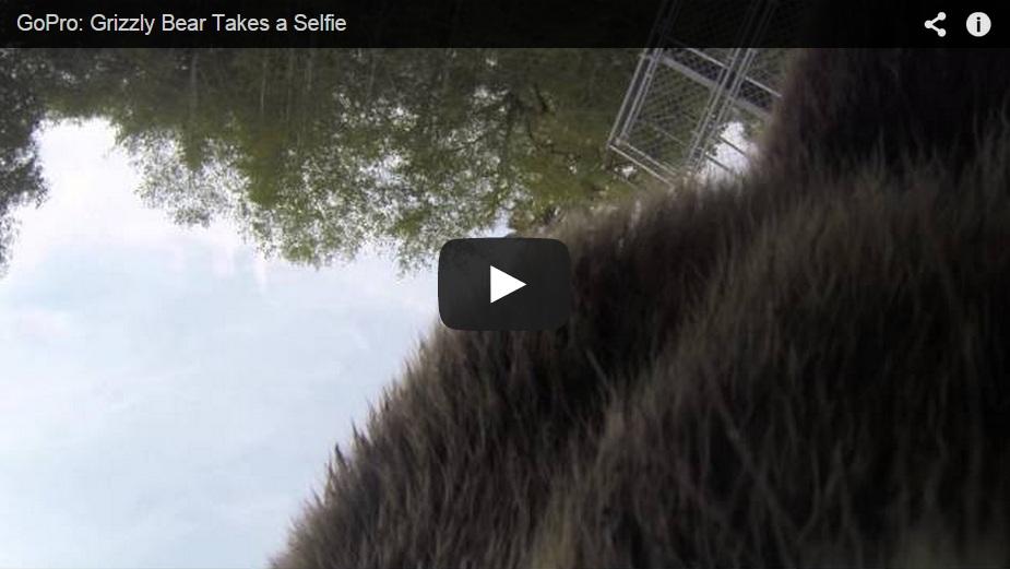 Un oso roba una Go Pro y se hace un Selfie