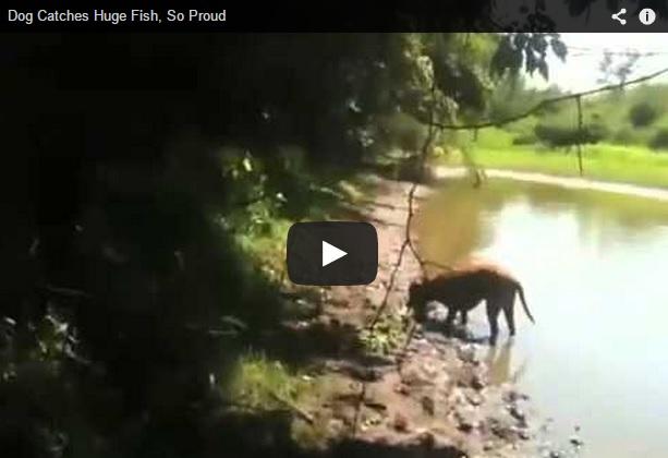 Un perro captura un gran pez en una charca