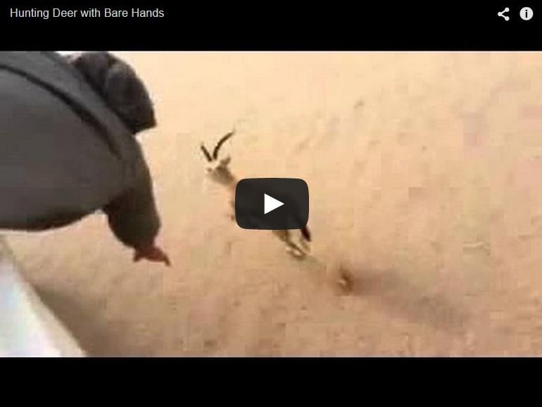 Captura una gacela desde un camión cogiéndola por sus cuernos