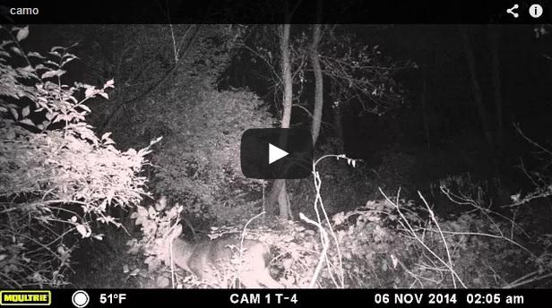 Un ciervo 'camuflado'