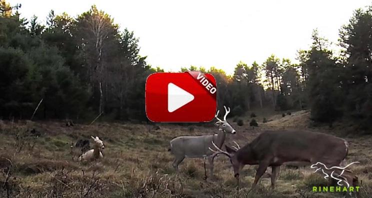 ¿Cómo reaccionan los ciervos a los reclamos en 3D?