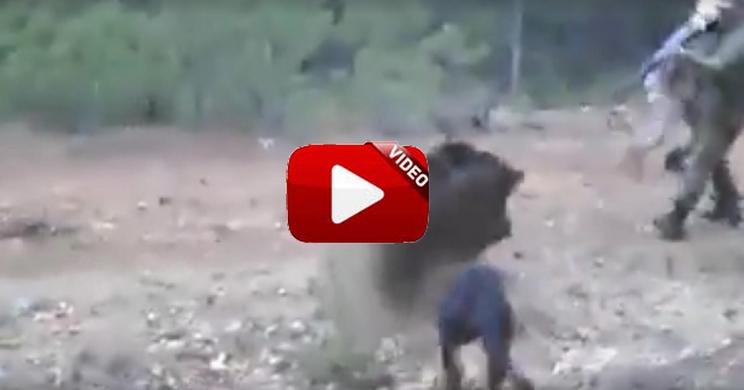 Remata este jabalí poniendo en peligro a sus perros