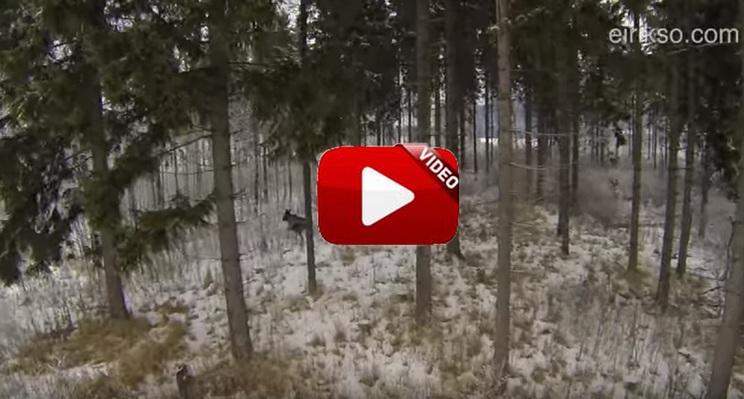 Este vídeo de dos cazadores rastreando una pieza con un dron arrasa en YouTube