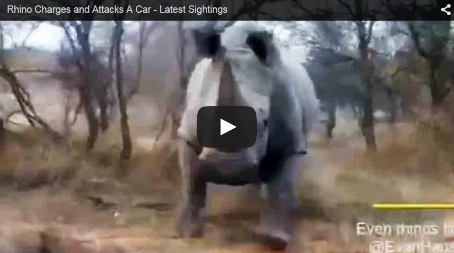 Un rinocerante carga contra un coche