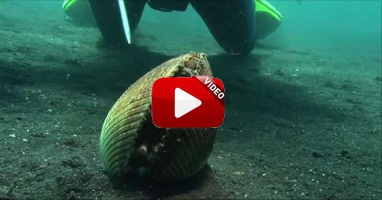 Parece una almeja normal pero cuando veas este vídeo ¡vas a alucinar!