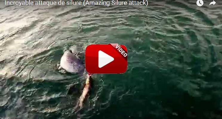 Mira lo que les pasó a estos pescadores con un Siluro