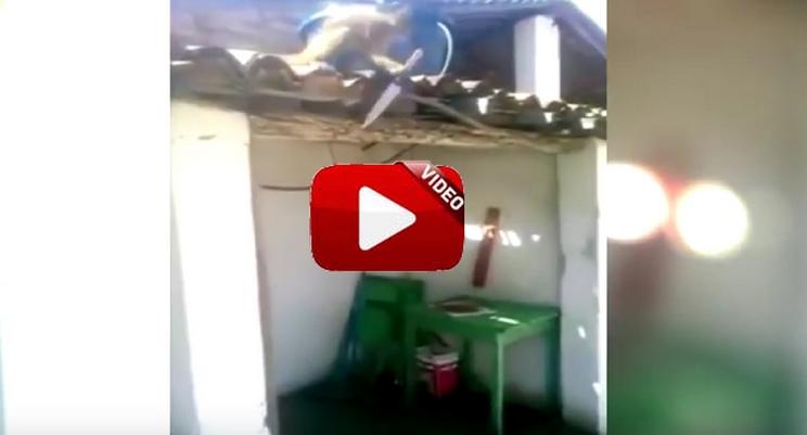 Un mono borracho causa el pánico en un barrio de Brasil