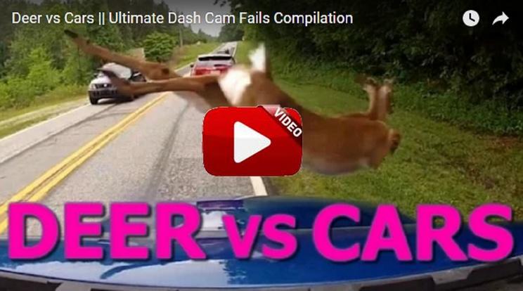 La recopilación de accidentes de coches contra ciervos más asombrosa que jamás hayas visto