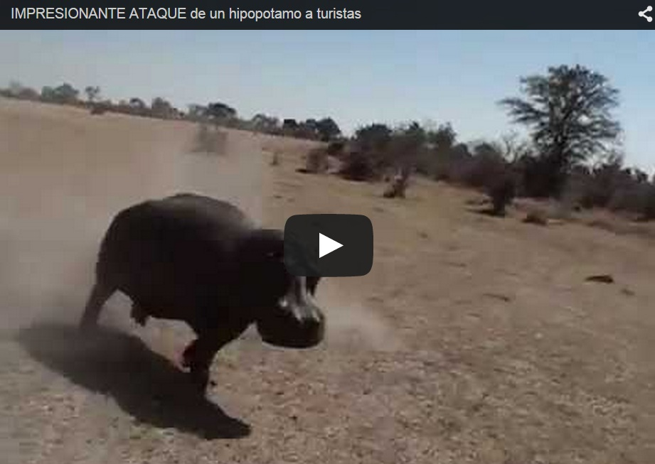 Un hipopótamo ataca a un todoterreno lleno de turistas