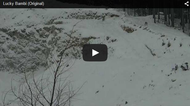 Unos ciervos escapan de una explosión por los pelos