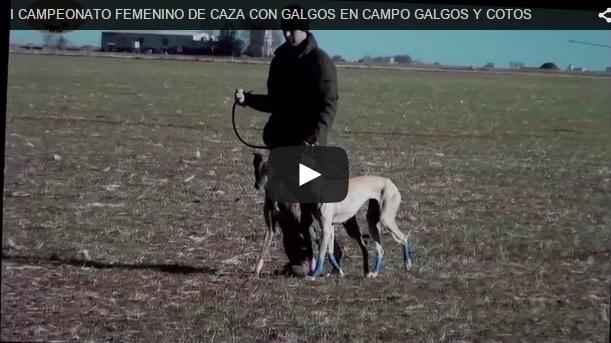 I Campeonato Femenino de Caza con Galgos en Campo