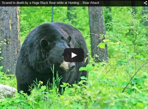 Un oso intenta subir al árbol donde esperaba este cazador