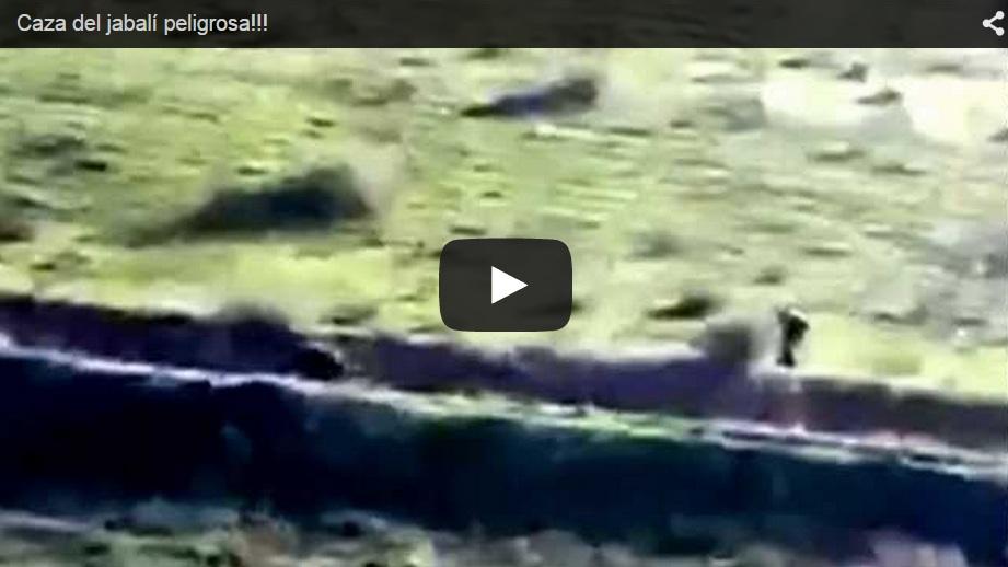 Un jabalí ataca a una cazador después de recibir decenas de disparos
