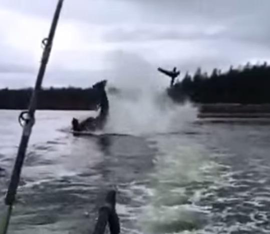Un orca ataca a un león marino y lo lanza por los aires