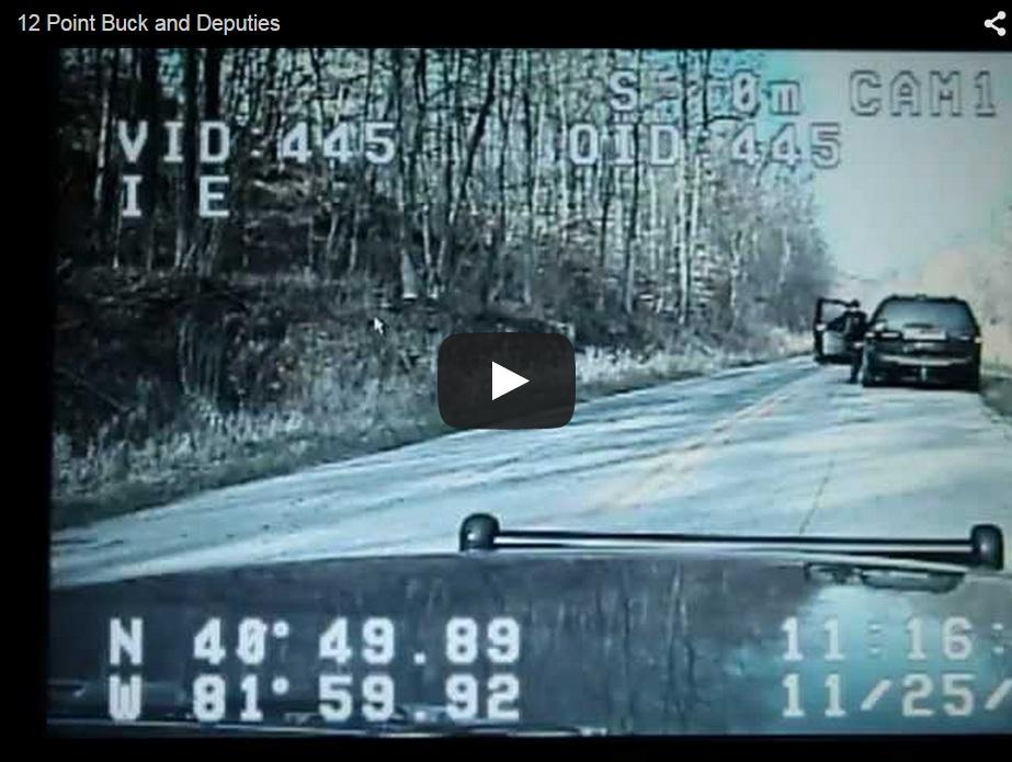 Un ciervo detiene el tráfico de una carretera