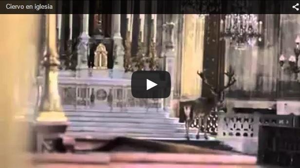 El ciervo que quiso escuchar misa