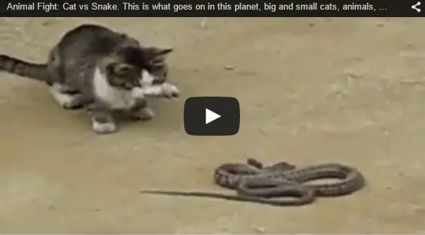 Gato vs. serpiente