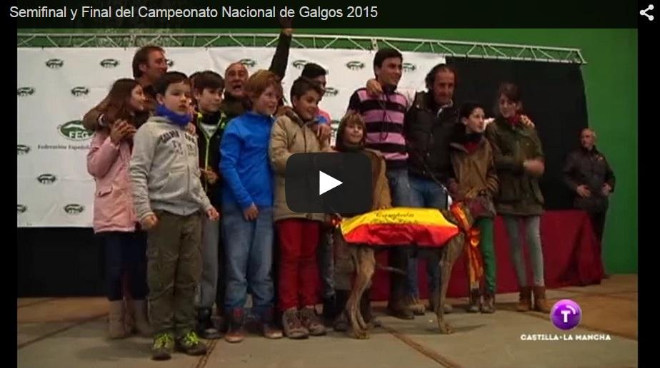 Campeonato de España de Galgos en Campo 2015