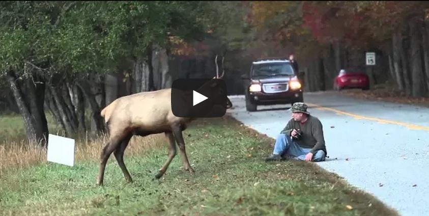 Ciervo vs. Fotógrafo