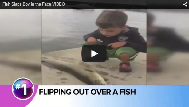 Un pez propina una buena 'bofetada' a este niño