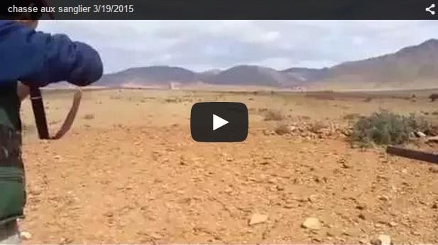 Disparan a una piara de jabalíes en el desierto