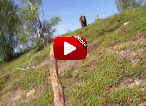 Un oso le persigue y lo graba con su cámara