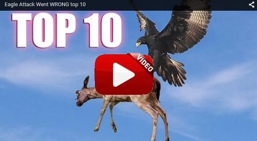 Los 10 mejores ataques de rapaces… ¡errados!