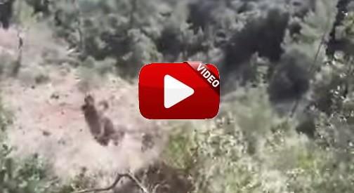 Un perro y el jabalí que perseguía se despeñan por un barranco