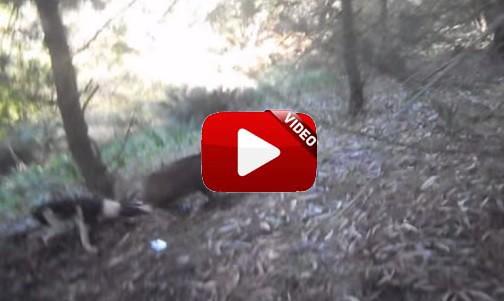 Pone en peligro la vida de este perro al disparar a un jabalí