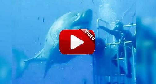 'Deep Blue', el tiburón más grande del mundo jamás filmado