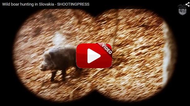 Caza de grandes jabalíes en Eslovaquia