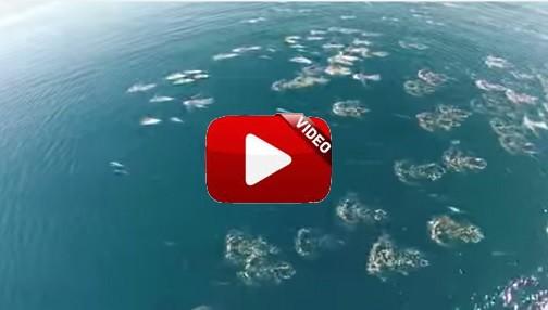 Graban las mejores imágenes de delfines y ballenas gracias a un dron