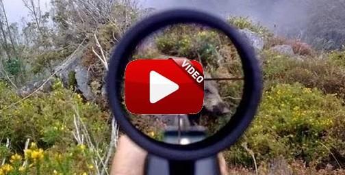 La caza del jabalí en sus diferentes modalidades