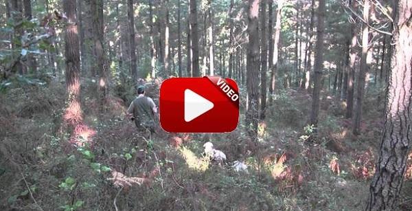 Intenta cazar becadas y… ¡se lleva esta sorpresa!