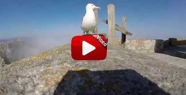 Un gaviota roba una GoPro y graba espectaculares imágenes de las Islas Cíes