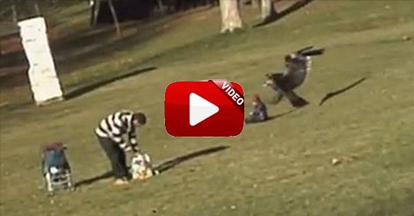 Un águila ataca a un bebé al confundirlo con una presa