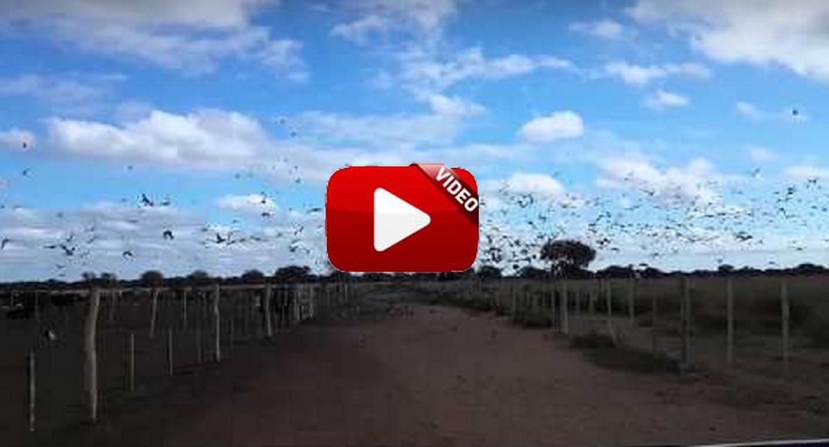 Uno de los mejores cotos de palomas del mundo
