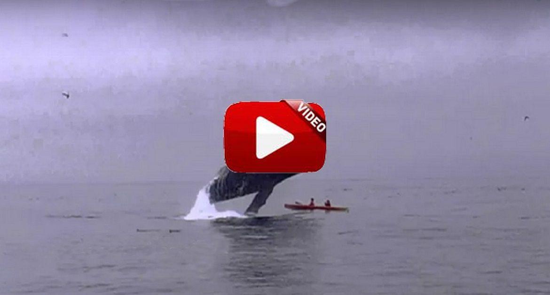 Asombroso salto de una ballena sobre un kayak con piragüistas