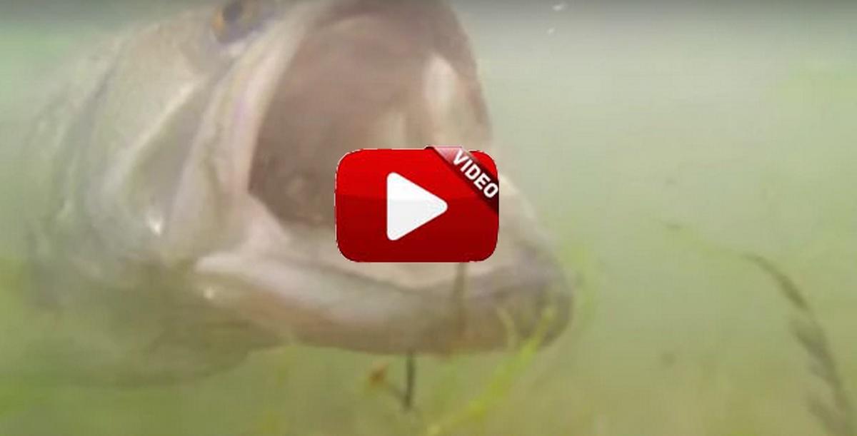 Graba la picada de este bass bajo el agua