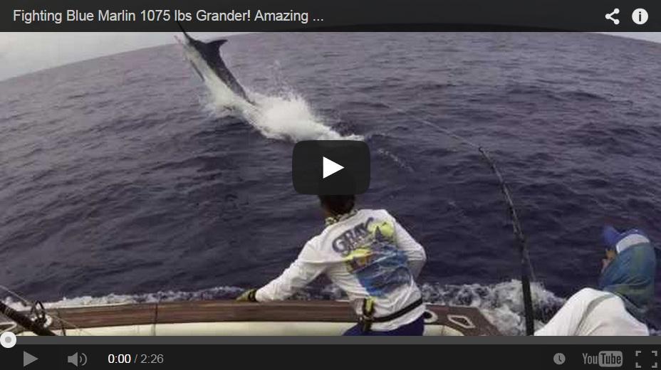 Un pescador lucha con un marlin de casi 500 kilogramos