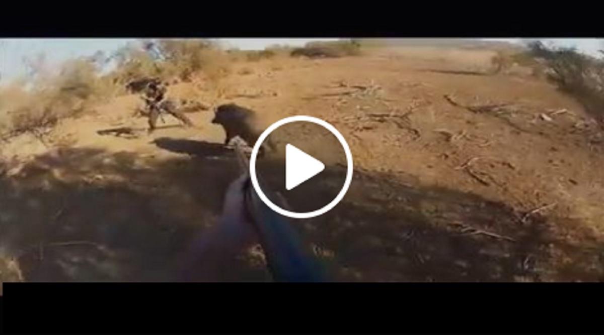Un cazador está a punto de disparar a su compañero al rematar a este jabalí