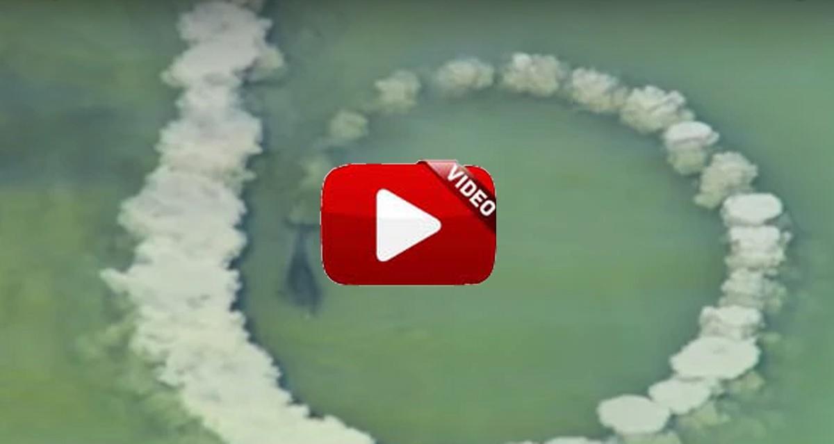 La forma que tienen de pescar estos delfines te va a dejar con la boca abierta