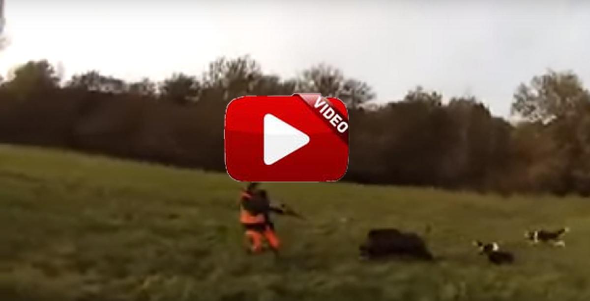 Un jabalí les ataca y su reacción a punto está de provocar una tragedia