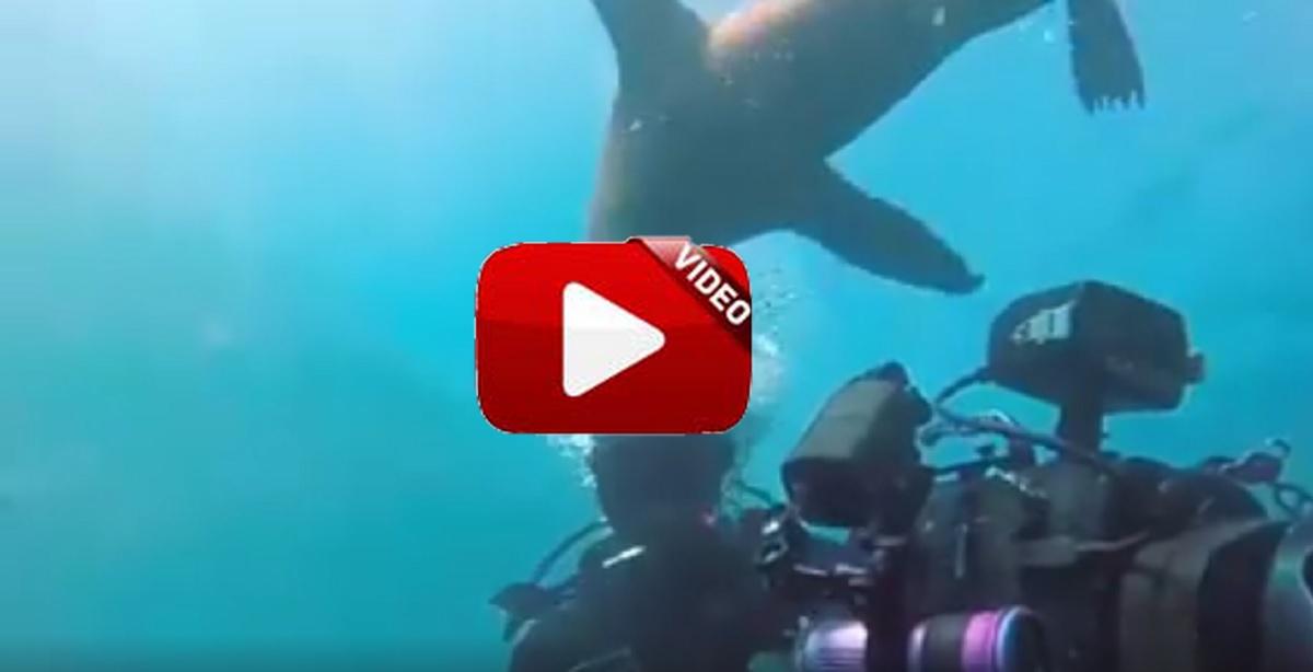 Animales atacando esta vez en el medio acuático