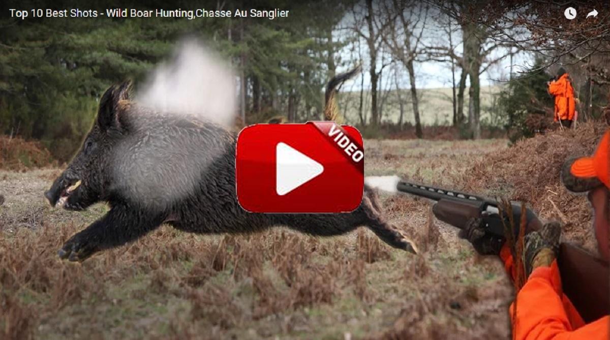 Los 10 mejores lances de caza al jabalí