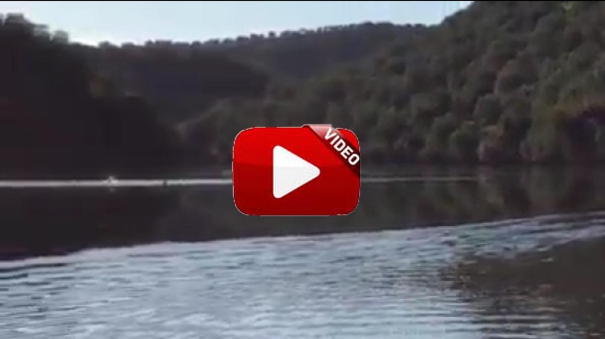 Un jabalí se tira a un gran río y toda la rehala lo sigue