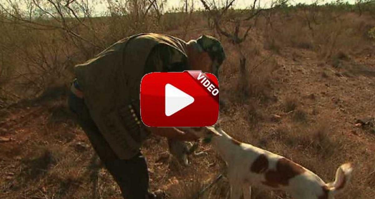 Descaste de conejo en Murcia