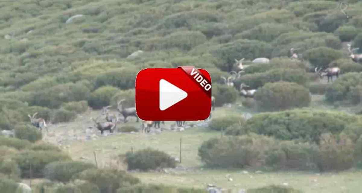 Cazadores de lances: rececho de monteses en Gredos